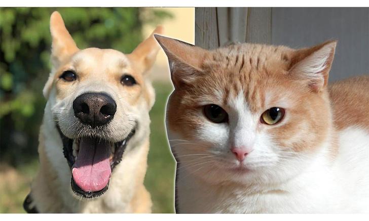 Фото №1 - Котопёс недели: собака Лаки и кошка Мила