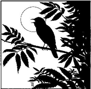 Фото №1 - Уроки для птиц