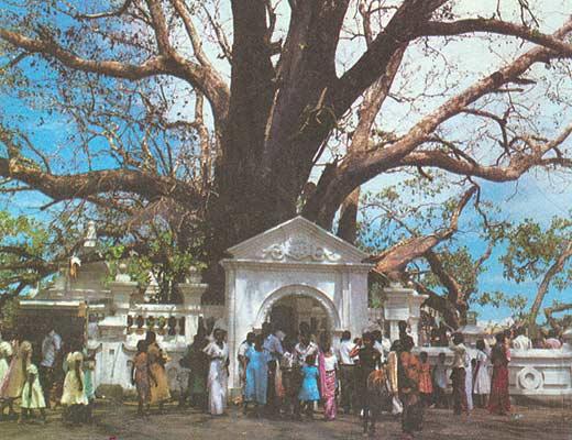 Фото №1 - Ланкийский треугольник