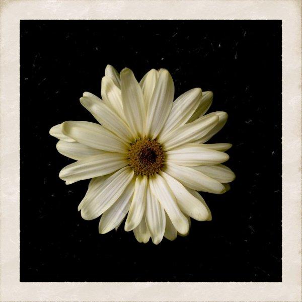 Обложка сингла Коди Симпсона Flower