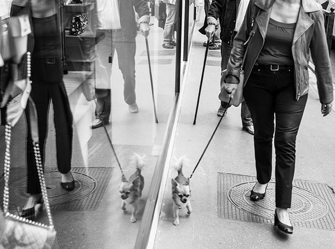 Фото №17 - Каннский фестиваль-2015: как живет город