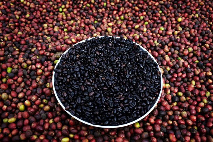 Фото №1 - Найден способ уберечь кофейные деревья от гибели