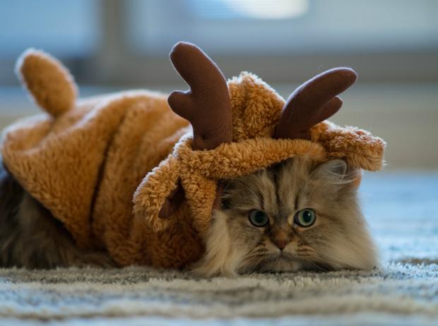 Фото №13 - Вырядился: забавные новогодние наряды домашних питомцев