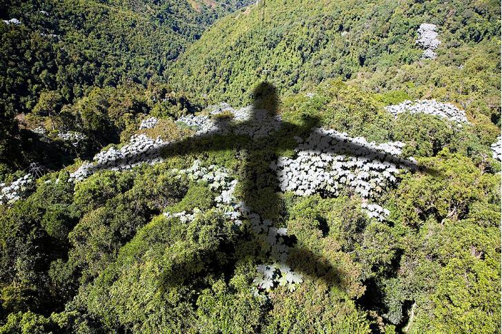 Фото №3 - Наука: ужас летящий