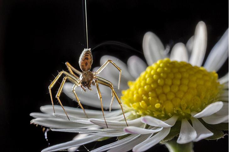 Фото №3 - Летающие пауки, капли раздражения и другие новые открытия