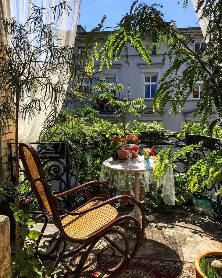 Фото №1 - Зеленый оазис на балконе: 5 растений, которые помогут перенести жару