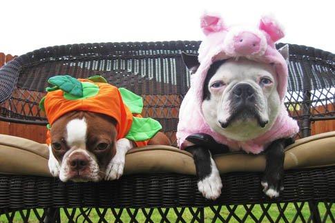 Фото №21 - Фотоподборка недели: собаки, которые уже готовы к Хэллоуину