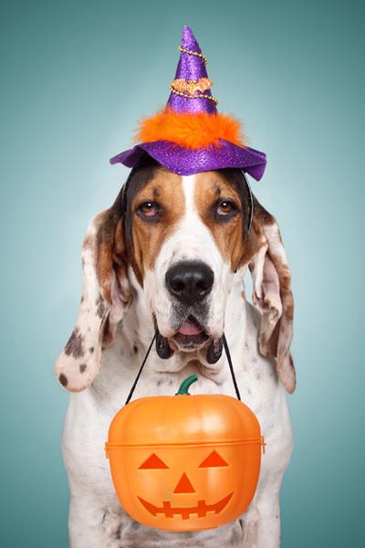 Фото №6 - Фотоподборка недели: собаки, которые уже готовы к Хэллоуину