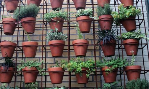 Фото №1 - Как комнатные растения очищают воздух в офисе и в квартире