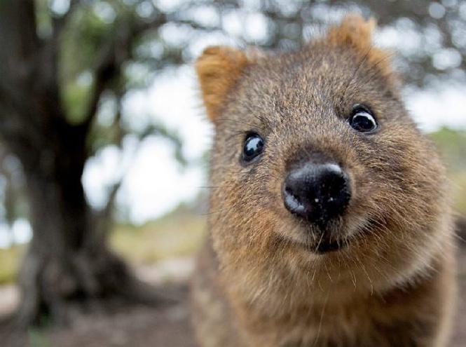 Самые красивые животные в мире фото с названиями сказочные