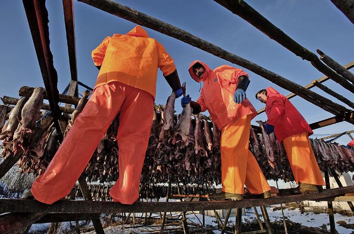 Фото №3 - Норвегия: рыбацкие сети