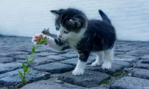 Фото №1 - Врачи прооперировали подростка, спасавшего котенка в трансформаторной будке