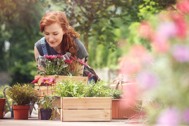 Фото №1 - Что посадить на участке, чтобы там не росли сорняки