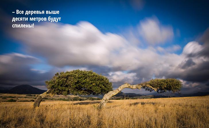 Фото №9 - Ветроспектива: мистраль, сирокко и еще 5 знаменитых ветров