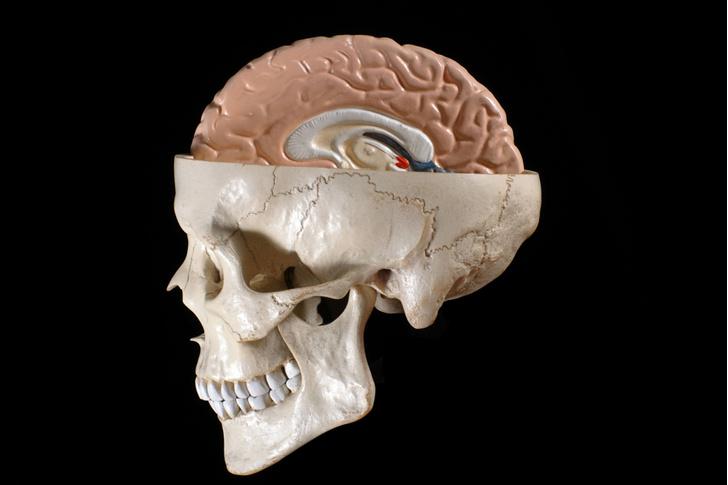 Фото №1 - Ученые обнаружили область мозга, отвечающую за беспокойство