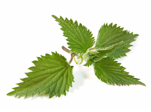 Фото №7 - Самые полезные лекарственные травы