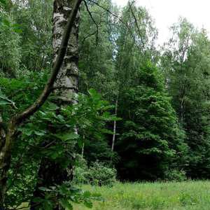 Фото №1 - Деревья очищают атмосферу