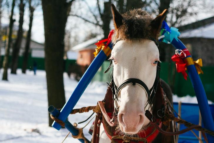 Фото №3 - Провожаем зиму: где в Петербурге погулять на Масленицу