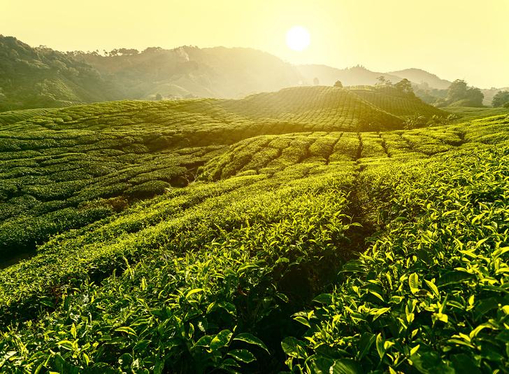 Фото №1 - Вышла коллекция чайных капсул Greenfield, совместимых с машиной Nespresso