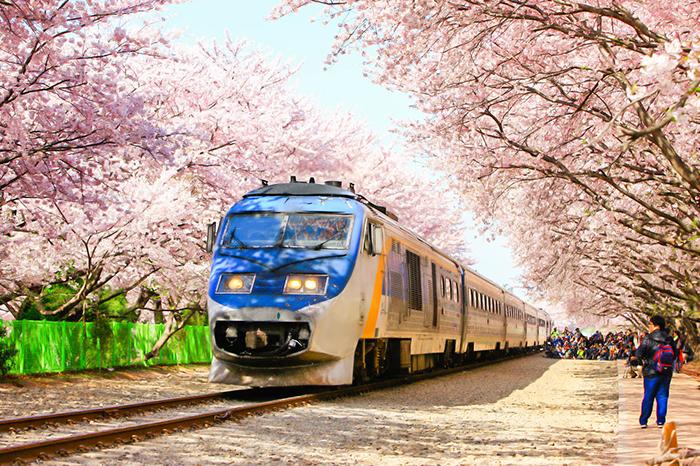 Фото №10 - Скорее в Корею: красочный путеводитель по стране