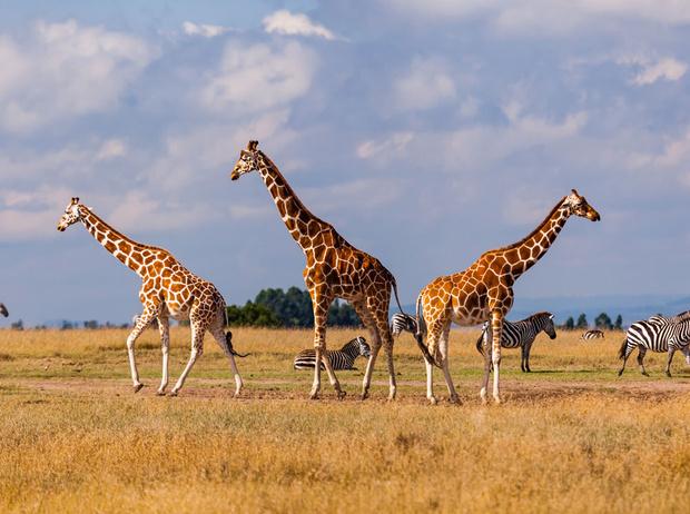 Фото №1 - Отдых в Кении: саванна, сафари, масаи