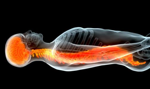 Фото №1 - Ученые научились восстанавливать поврежденный спинной мозг при помощи стволовых клеток