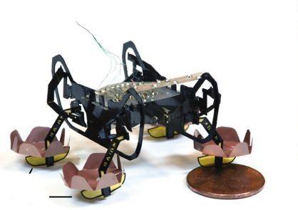 Фото №1 - В Гарварде изобрели механического таракана, который ходит по воде и умеет плавать