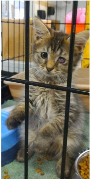 Фото №4 - Дом меняет все: 35 фото котиков до и после усыновления