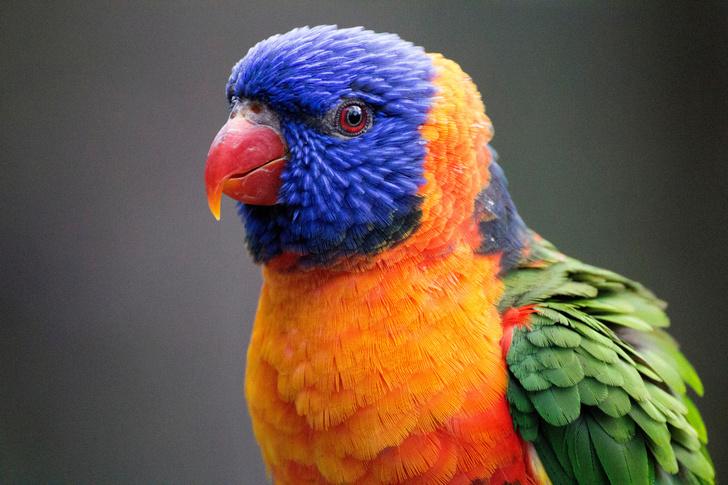 Фото №1 - Найдено объяснение цветному оперению птиц