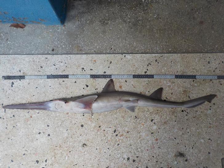 Фото №1 - Обнаружено два новых вида акул