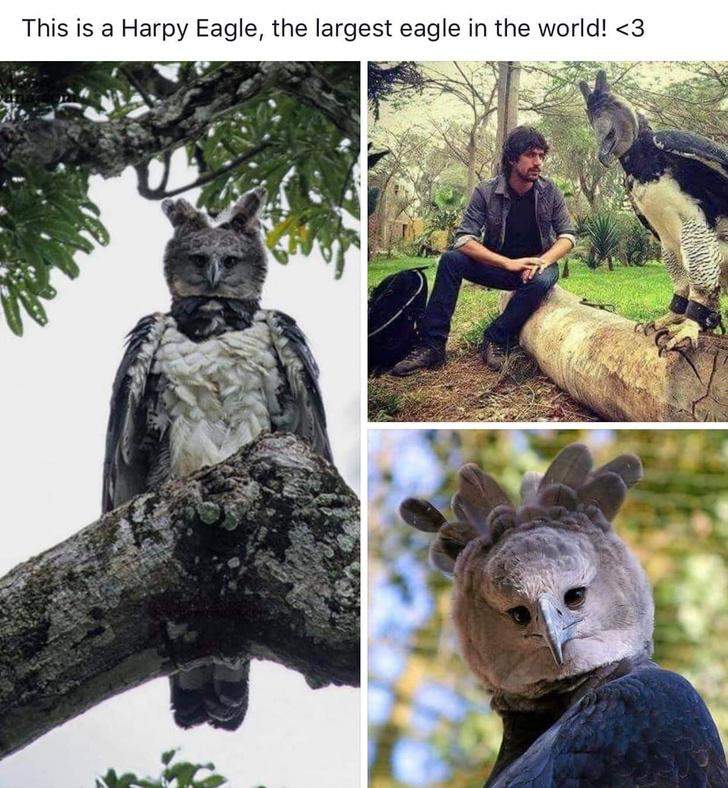 Фото №2 - В Интернете обсуждают огромного орла, который выглядит как человек в костюме