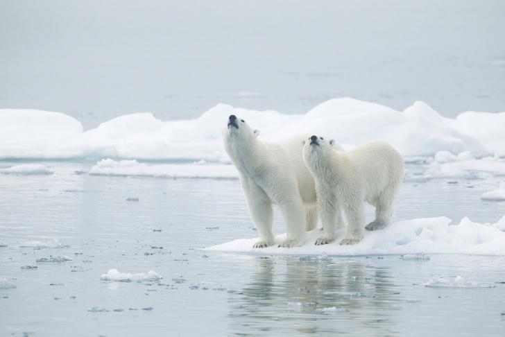 Фото №1 - Льды Арктики могут полностью растаять в этом году