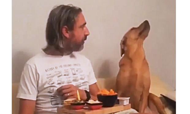 Фото №1 - Собака смешно делает вид, будто ее ни капельки не волнует, что там ест хозяин (видео)