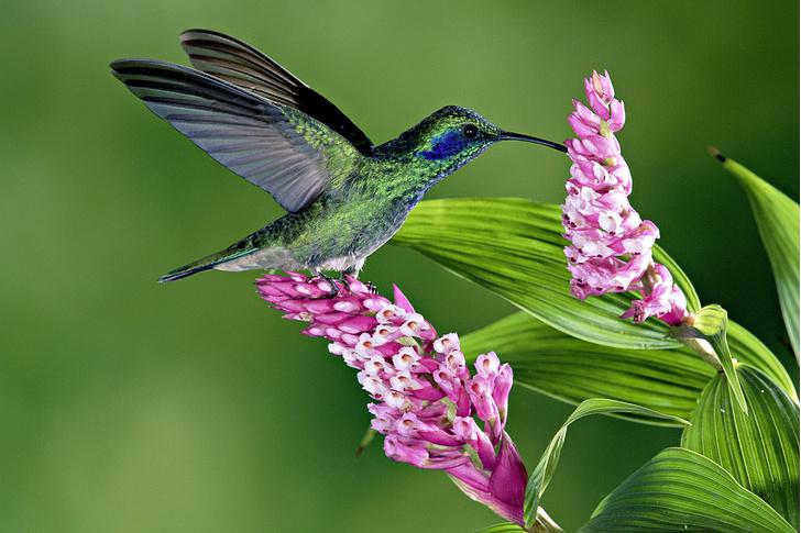 Фото №5 - Ботаника: прекрасные мошенницы