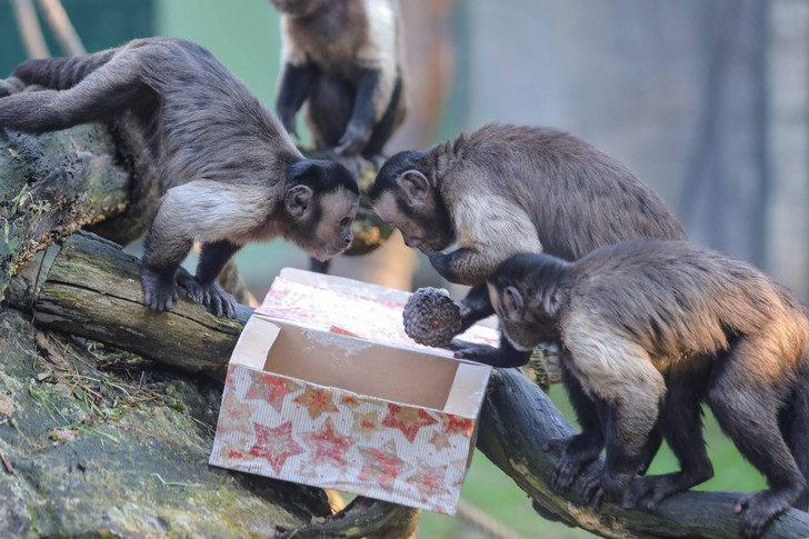 Фото №1 - У обезьян обнаружили психологическую особенность, как у человека