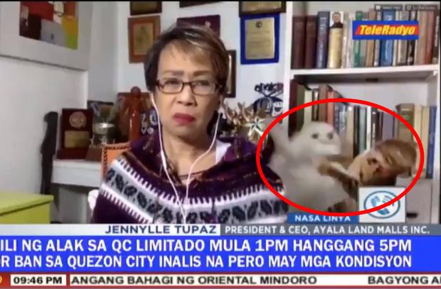 Фото №1 - Драка кошек за спиной журналистки в прямом телеэфире стала вирусной (видео)