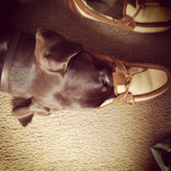 Фото №8 - 13 фото собак, притворяющихся утконосами