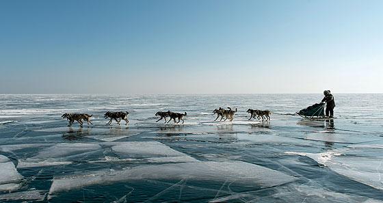 Фото №3 - Собачий холод