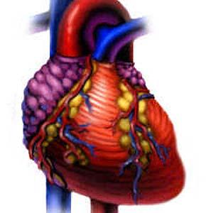 Фото №1 - Ожоги приводят к болезням сердца