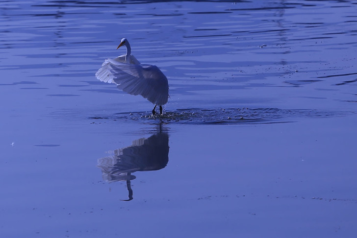 Фото №1 - Что спасет птиц от попадания в рыболовные сети