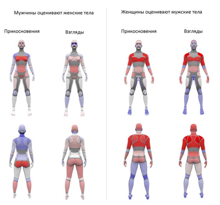 Фото №4 - Новейшая карта мужских и женских эрогенных зон