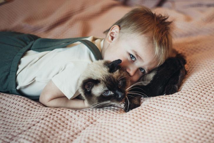 Фото №1 - Кошки могут помочь детям с аутизмом