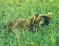 Фото №6 - Медвежья зона
