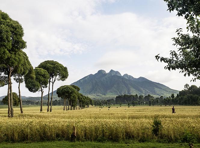 Фото №5 - Руанда: завтрак с гориллами, танцы и другие лекарства