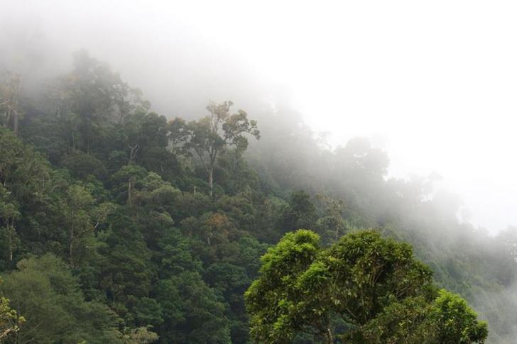 Фото №1 - Глобальное потепление сделает тропики непригодными для жизни