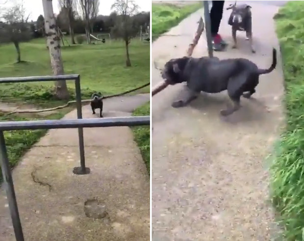 Фото №1 - Пес так и не смог пронести палку под турникетом, несмотря на помощь хозяйки (видео)