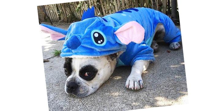 Фото №6 - 20 очаровательных собак в костюмчиках по мотивам мультфильмов Disney