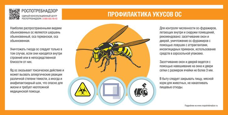 Фото №1 - Опасно для жизни: почему нельзя игнорировать укус осы или пчелы
