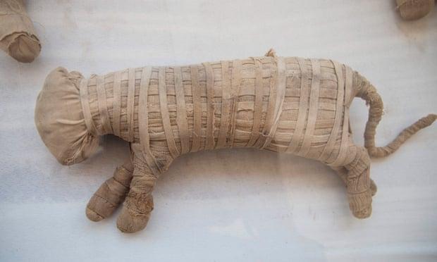 Фото №1 - В Египте обнаружено масштабное захоронение мумий животных