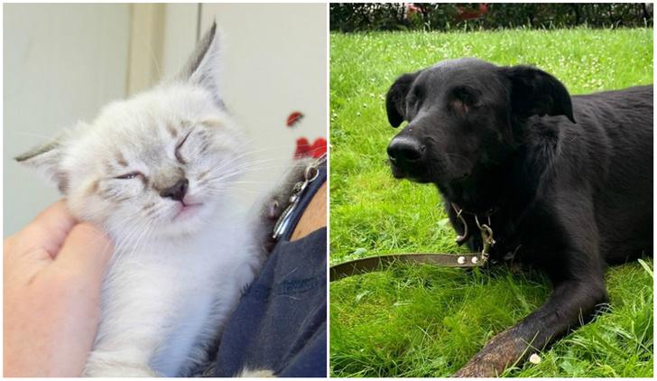 Фото №1 - Котопёс недели: котенок Стиви и собака Ночка
